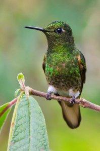national parks worldwide hummingbird  ecuador