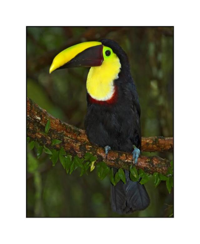 national parks worldwide toucan belize