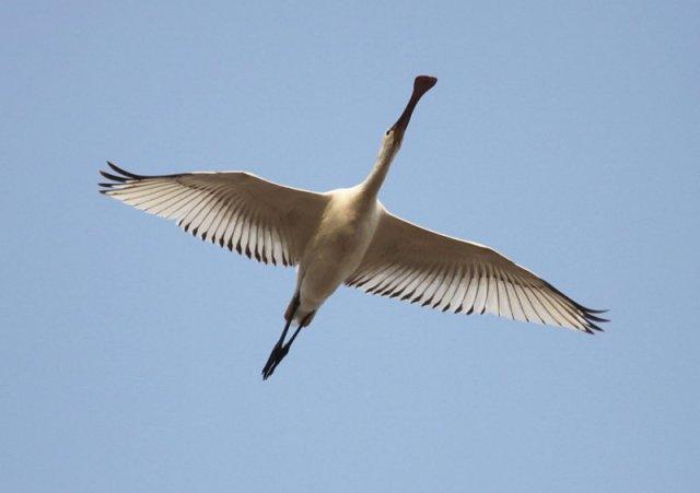 national parks worldwide   china  spoonbill  birdwatching