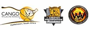 wild animals  african cheetah  south african national parks  wildanimalvolunteers.com  national parks of the world national parks of africa african wildlife conservation  national parks