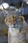 national parks of europe national parks of the world lynx national parks of africa national parks of canada national parks of australia  national parks of north america endangered species wildlife conservation