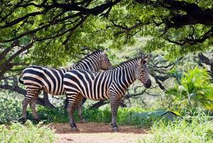 national parks of the world zebra  malawi national parks