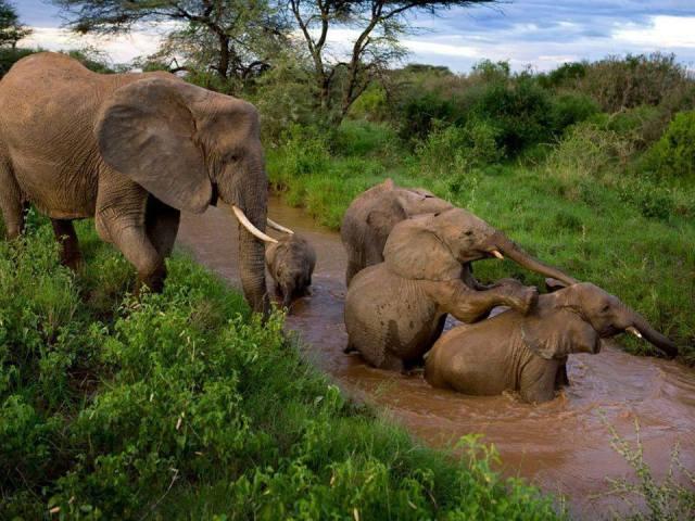 Natiional Parks Worldwide  Ghana  Africa African Elephant