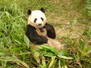 national parks worldwide  china  panda
