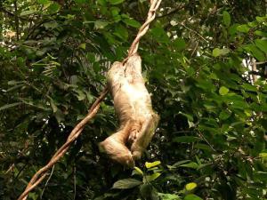 sloth national parks worldwide  brazil
