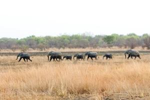 elephants zz2