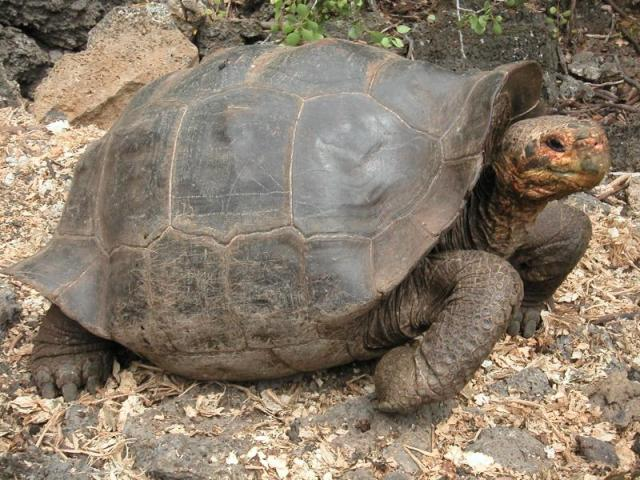 national parks worlswide  galapagos tortoise
