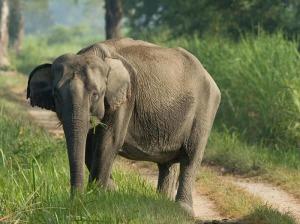 national parks worldwide  elephant