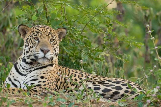 national parks worldwide Jaguar 1