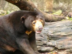 national parks worldwide bear china