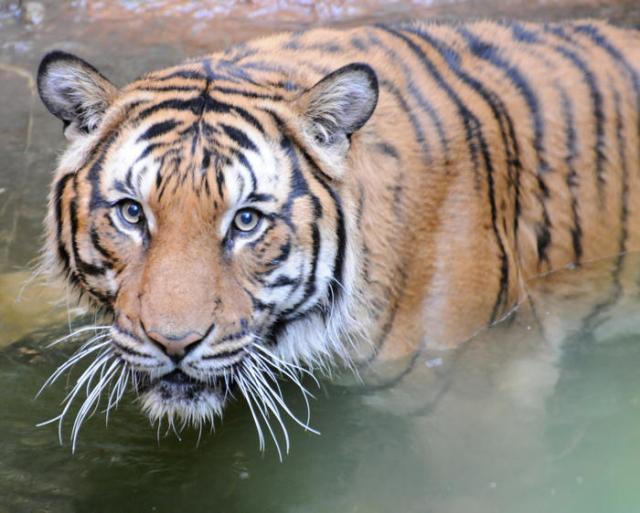 nationak parks worldwide  tiger Bardia National Park nepal