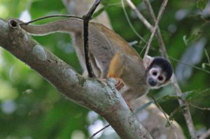 national Parks worldwide colombia monkey national parks of south america