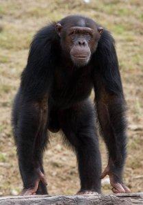 national parks of the world Mahale National Parks Chimpanzee Tanzania