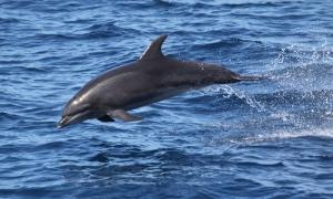 national parks of the world   Skeleton Coast National Park  Namibia national parks   dolphin   africa