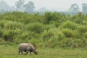 National Parks Worldwide  one-horned rhino nepal Bardia National Park
