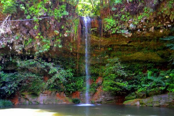 Lambir Hills National Park  -  Malaysia